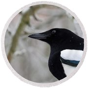 Portrait Of A Magpie Round Beach Towel