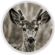 Portrait Of A Male Deer II Round Beach Towel