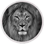 Portrait Of A Male Lion Black And White Version Round Beach Towel