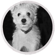 Portrait Of A Puppy In Black And White Round Beach Towel