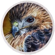 Portrait Of A Red-tailed Hawk Round Beach Towel