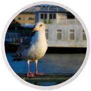 Portrait Of A Seagull Round Beach Towel