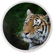 Portrait Of A Tiger Round Beach Towel