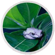 Portrait Of A Tree Frog Round Beach Towel