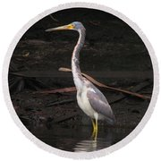 Portrait Of A Tri-colored Heron Round Beach Towel