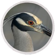 Portrait Of A Yellow Crowned Heron Round Beach Towel