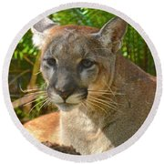 Portrait Of A Young Florida Panther Round Beach Towel