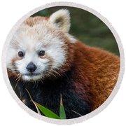 Portrait Of Cini The Red Panda Round Beach Towel