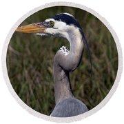 Portrait Of Great Blue Heron Round Beach Towel