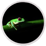 Portrait Of Red-eyed Tree Frog Under The Light At Night Round Beach Towel