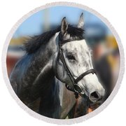 Portrait Of The Grey Race Horse Round Beach Towel