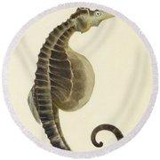 Pot Bellied Seahorse. Hippocampus Abdominalis Round Beach Towel