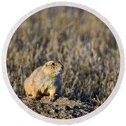Prairie Dog Alert Round Beach Towel