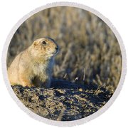 Prairie Dog Watchful Eye Round Beach Towel