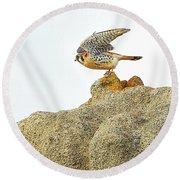 Prairie Falcon Round Beach Towel
