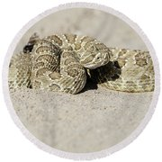 Prairie Rattlesnake  Round Beach Towel