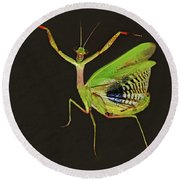 Praying Mantis Round Beach Towel
