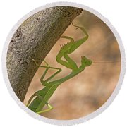 Praying Mantis On The Hunt Round Beach Towel
