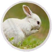 Praying White Rabbit Round Beach Towel