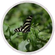 Precious Black And White Zebra Butterfly In The Spring Round Beach Towel