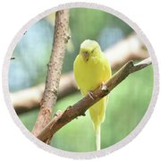 Precious Little Yellow Parakeet In The Wild Round Beach Towel