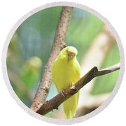 Precious Yellow Budgie Parakeeet In The Wild Round Beach Towel