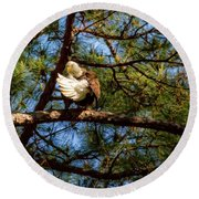 Preening Bald Eagle Round Beach Towel