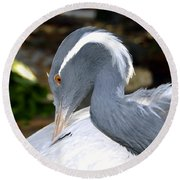 Preening Bird Round Beach Towel