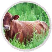 Pretty Brown Cow  Round Beach Towel