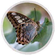 Pretty Butterfly Resting On The Leaf Round Beach Towel