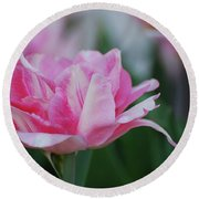 Pretty Candy Striped Pale Pink Tulip In Bloom Round Beach Towel