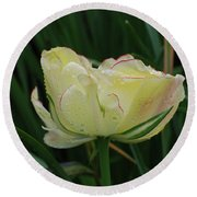 Pretty Cream Colored Tulip Edged In Red With Dew Round Beach Towel