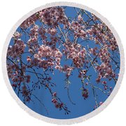 Pretty In Pink - A Flowering Cherry Tree And Blue Spring Sky Round Beach Towel