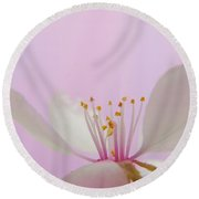 Pretty In Pink Cherry Blossom Round Beach Towel