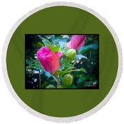 Pretty In Pink Hibiscus Flowers And Buds Round Beach Towel