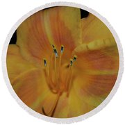 Pretty Orange Daylily Flowering With Pollen On It's Stamen Round Beach Towel