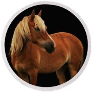 Pretty Palomino Pony Round Beach Towel