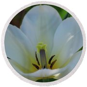 Pretty Perfect White Tulip Flower Blossom In The Spring Round Beach Towel