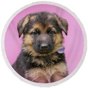 Pretty Puppy In Pink Round Beach Towel