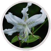 Pretty White Stargazer Lily Flower Blossom Round Beach Towel