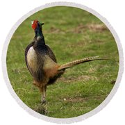 Private Pheasant Round Beach Towel