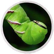 Privet Hawk Moth Caterpillar Round Beach Towel
