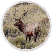 Prize Bull Elk Round Beach Towel