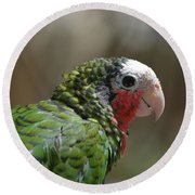 Profile Of A Conure Parrot Up Close Round Beach Towel