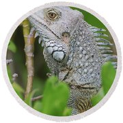 Profile Of A Gray Iguana In The Top Of A Bush Round Beach Towel