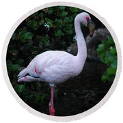 Profile Of A Pink Lesser Flamingo Round Beach Towel