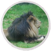 Profile Of A Sleeping Lion In Grass Round Beach Towel