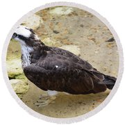 Profile Of An Osprey Bird In The Shallows Round Beach Towel