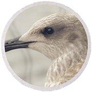 Profile Of Juvenile Seagull Round Beach Towel