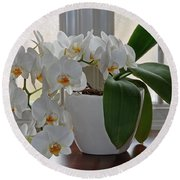 Profusion Of White Orchid Flowers Round Beach Towel